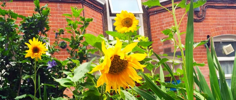 http://bethnalgreenestate.org/wp-content/uploads/2016/03/sunflowers.jpg